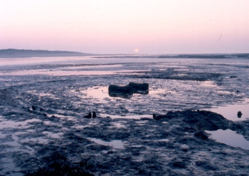 Seahenge, Holme-next-the-Sea beach. Photo by NPS Archaeology - February 2003